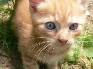Котенок в огороде
