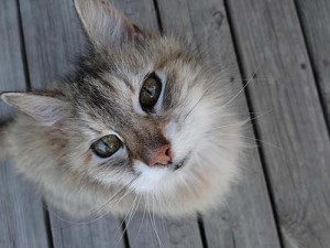 Мурлыкающий кот