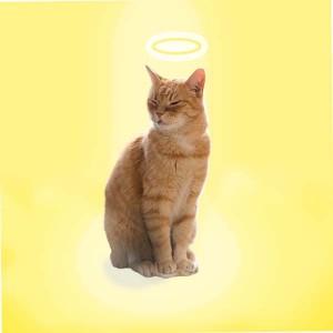 «Лечебные» кошки мифы и правда