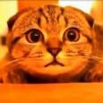 Гамавит для котят назначение, свойства, способы применения