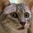 Как отучить кастрированного кота метить в доме?
