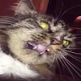 Как перевоспитать агрессивного котенка?