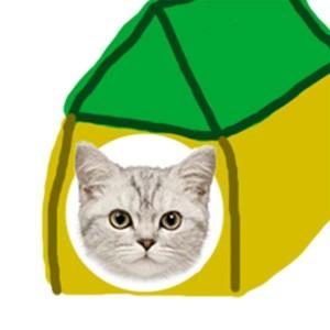 Как приучить котенка спать в домике?