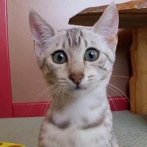 Почему кошка гадит в неположенных местах и как отучить её от этого