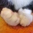 Почему кошки топчутся лапками?