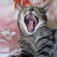 Почему кот постоянно кричит?