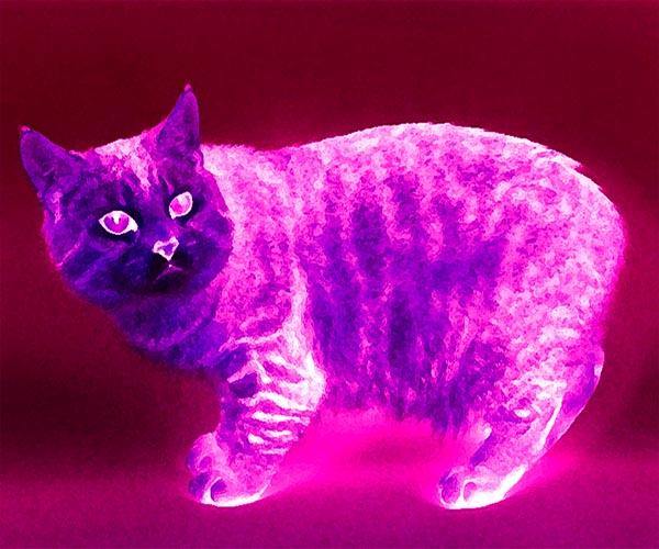 как видят кошки мир