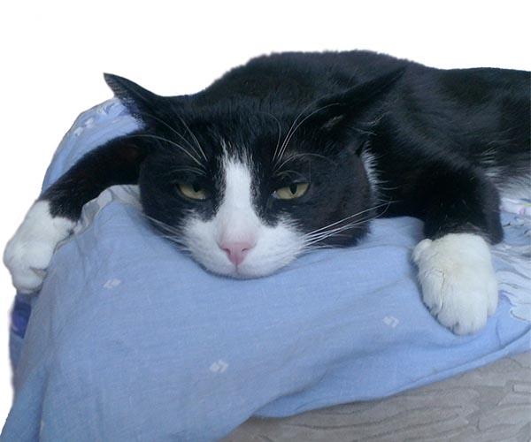 Корм для котят: как вырастить непривередливого в еде питомца