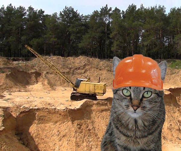 Как отучить кошку копать цветы