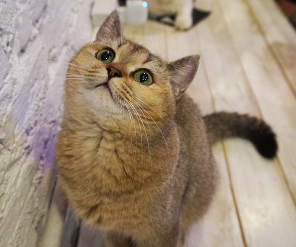 Почему люди любят кошек: научные факты
