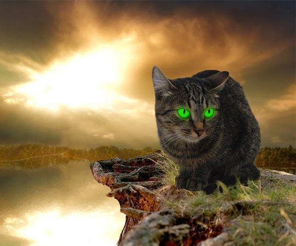 видеть во сне кошку