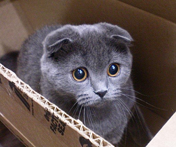 Демодекоз у кошек: лечение 43