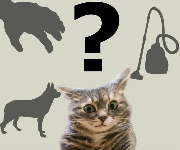 Чего боятся кошки и коты?