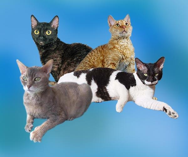 Какие кошки не вызывают аллергию у людей