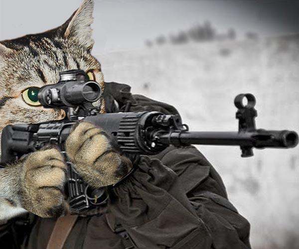 Почему кошка шипит на определенного человека?