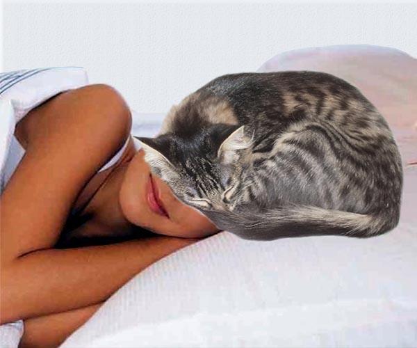Кошка спит у головы человека примета