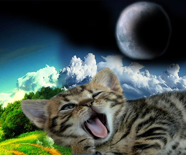 Спят ли кошки