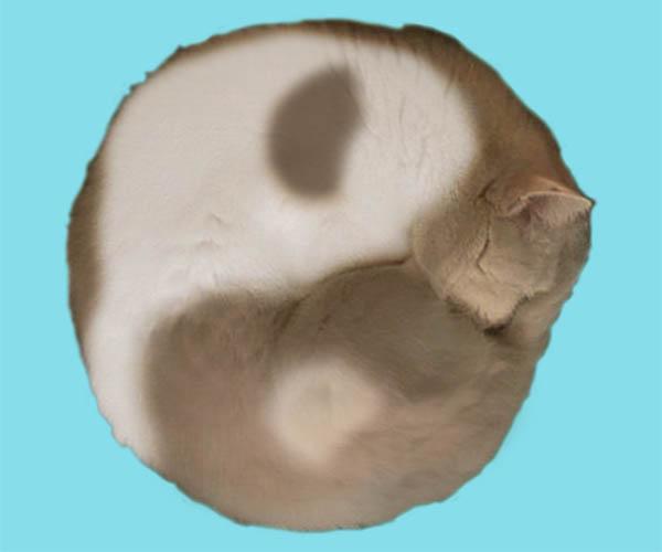 Какая энергетика преобладает в месте, где спит кошка?