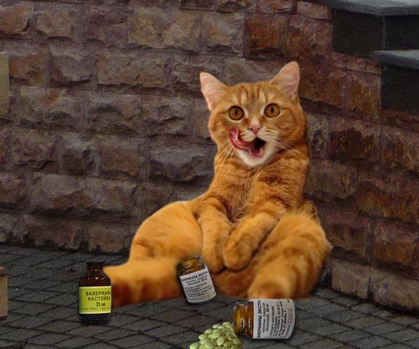 http://cats-funny.hhos.ru/wp-content/uploads/2016/08/Kiska-s-valeryankoy.jpg