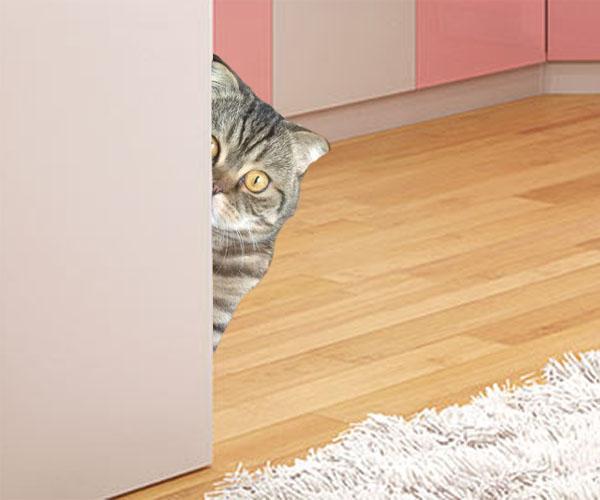 кошка ходит мимо лотка что делать?